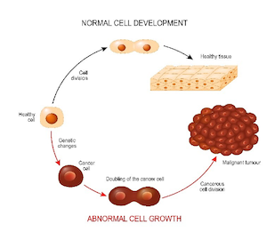 Normal Cell Development